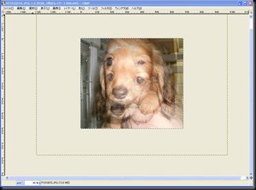 GIMPアニメーションGIF1